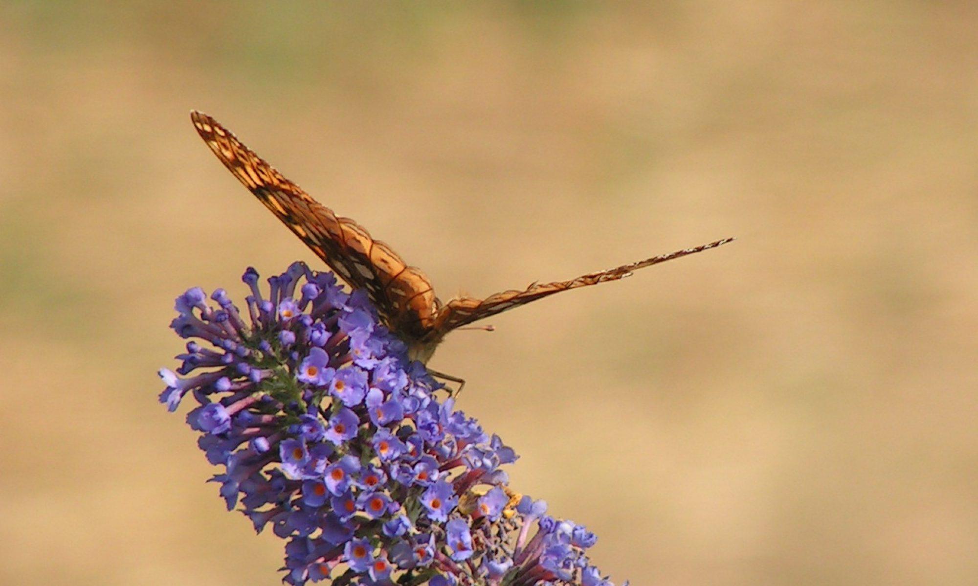 cropped-bodhi-butterfly.jpg