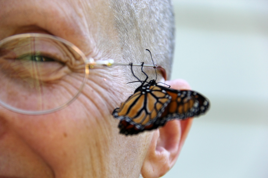 meeting a monarch butterfly